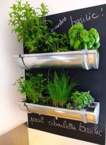 Verbildlichung der Pflanzen