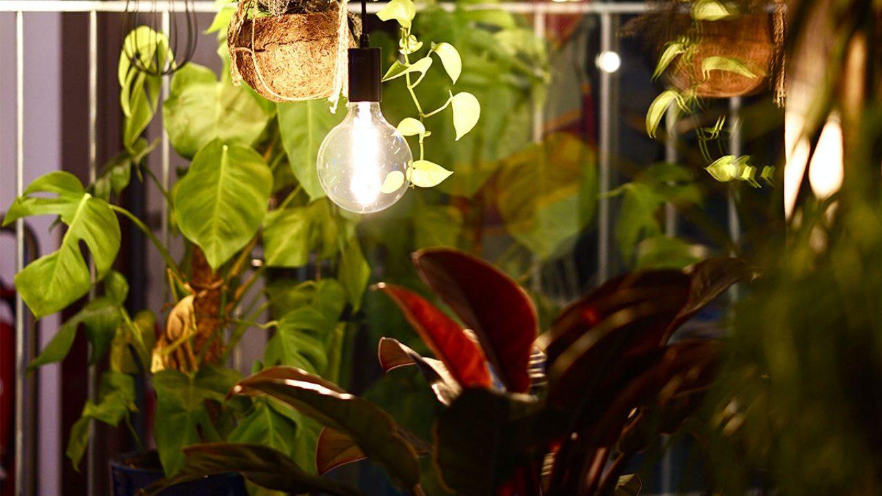 Top 10 Zimmerpflanzen Die Wenig Licht Brauchen