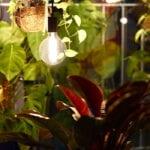 Pflanzen, die wenig Licht brauchen