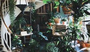 Treppenhaus mit Pflanzen