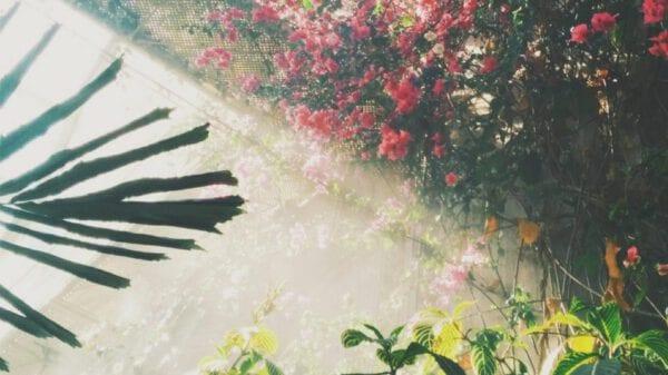 Pflanzen im Halbschatten