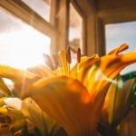 Gelbe Blume im Licht